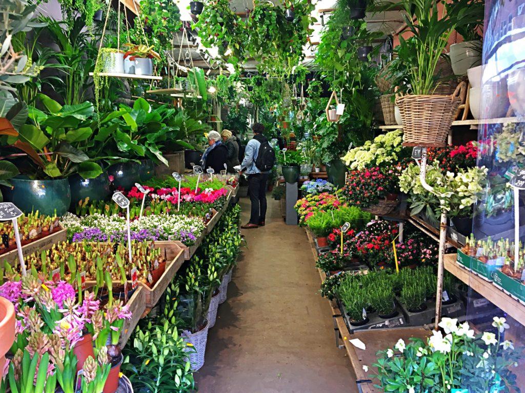 Blumenladen Albert Cupy Markt Amsterdam - Wochenende in Amsterdam
