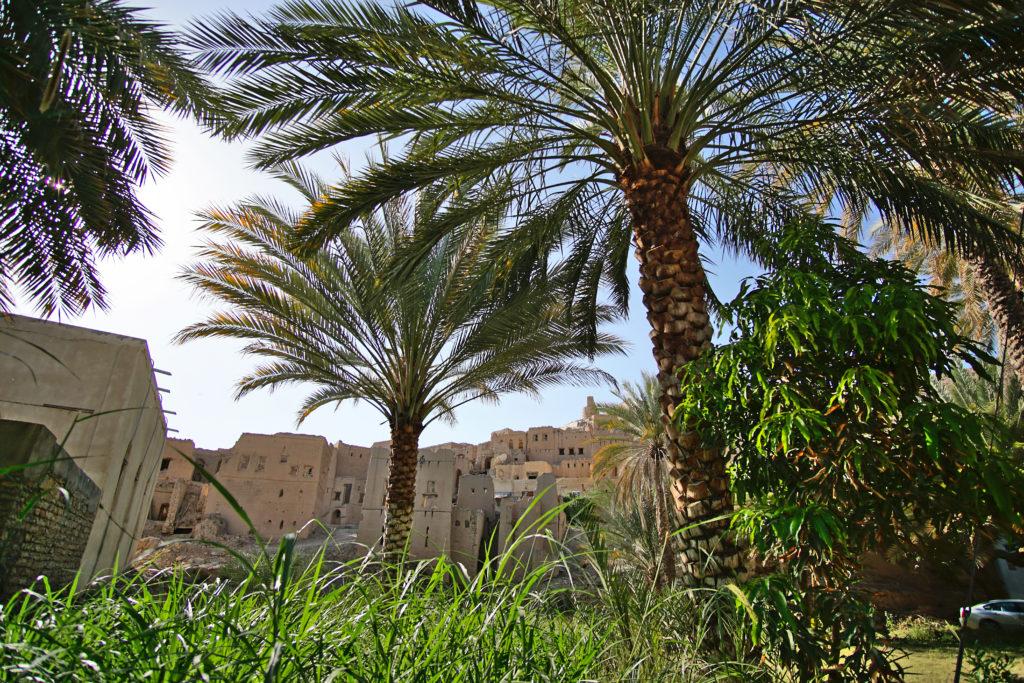 Oman Reiseroute - Birkat Al Mouz - Palmen