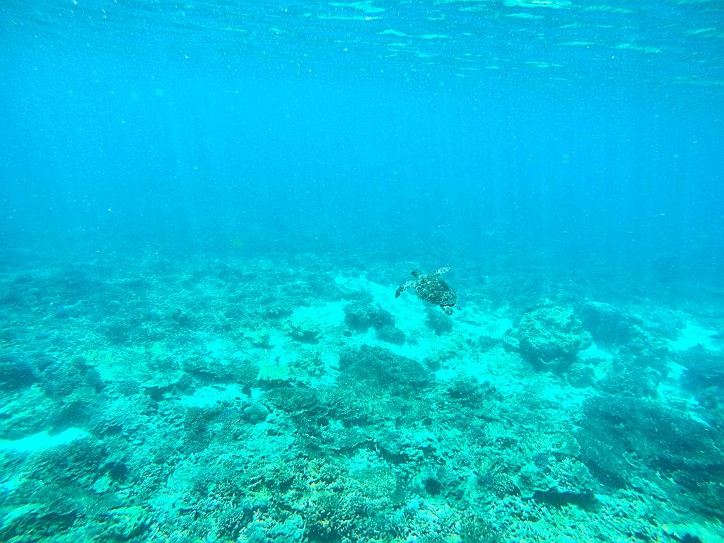 Oman Reiseroute - Muscat Muskat - Daymaniyat Islands Schnorcheln Schildkröte